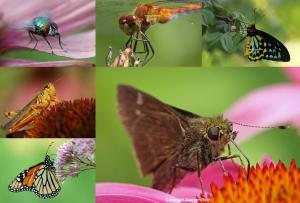 12 Insect Macro Photography Tips